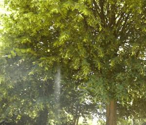 De tuin van Het Afscheidshuis